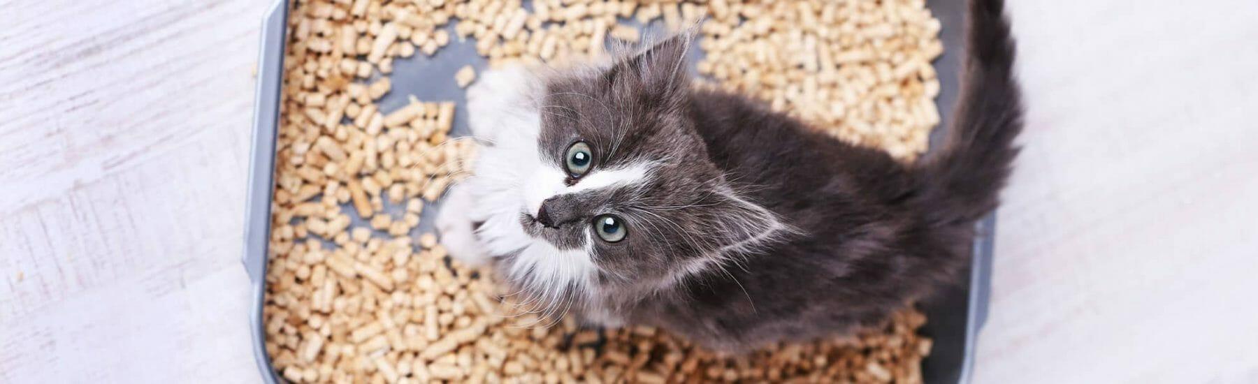 Cat Fecal